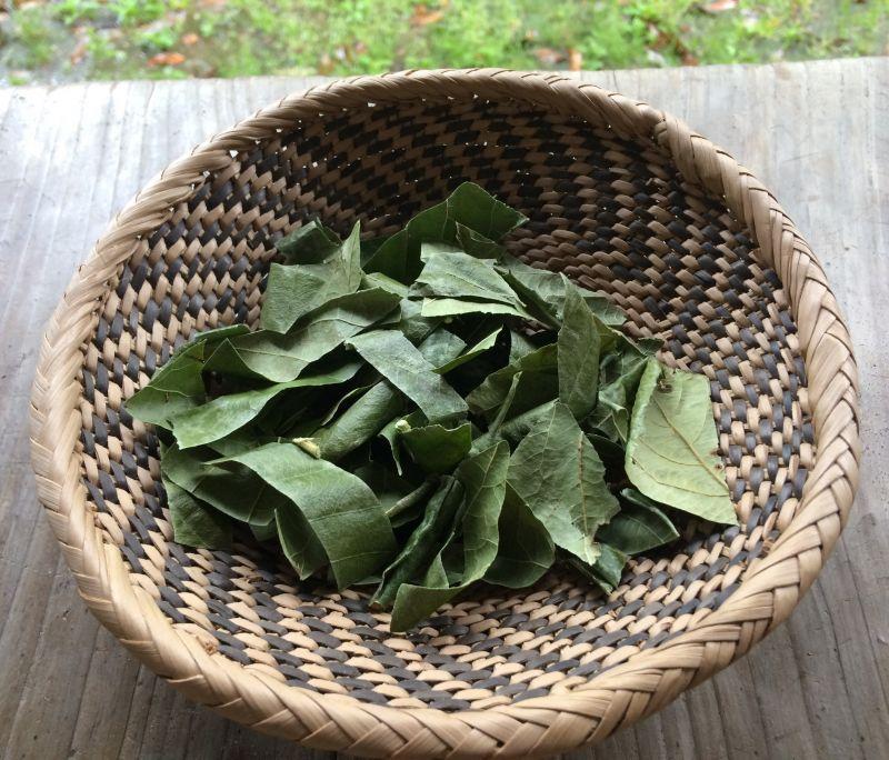 画像2: ビワの葉